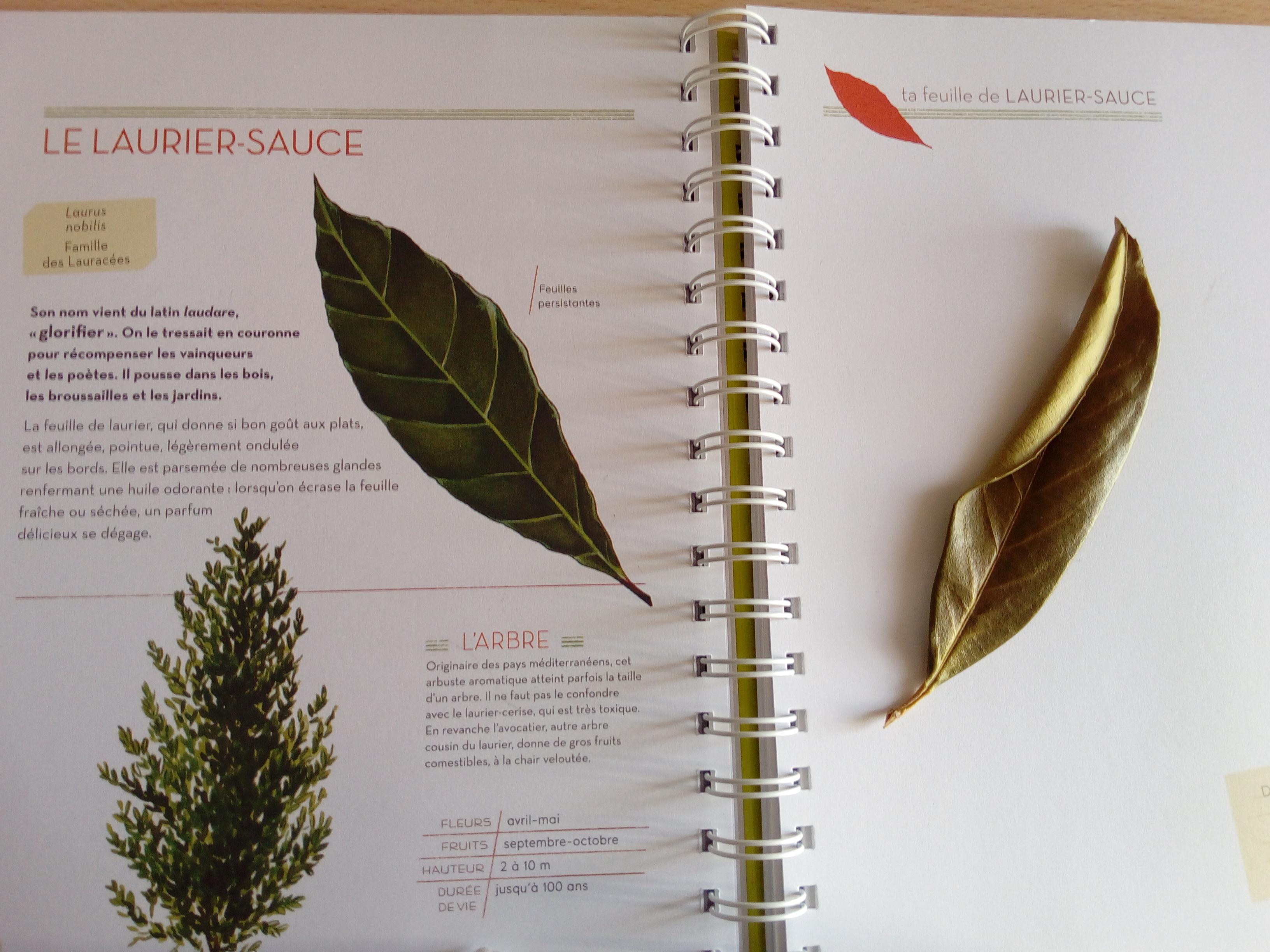 L\'Herbier des Feuilles : un herbier documenté et maniable