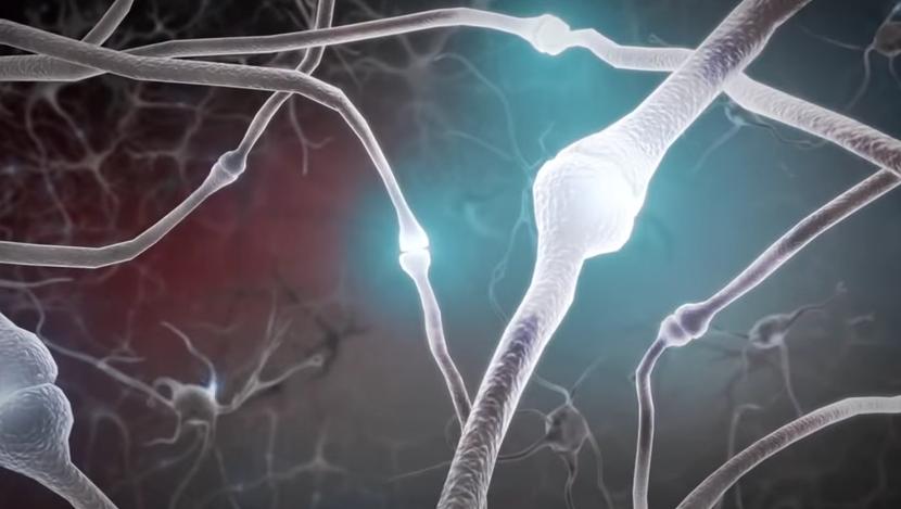élagage synaptique