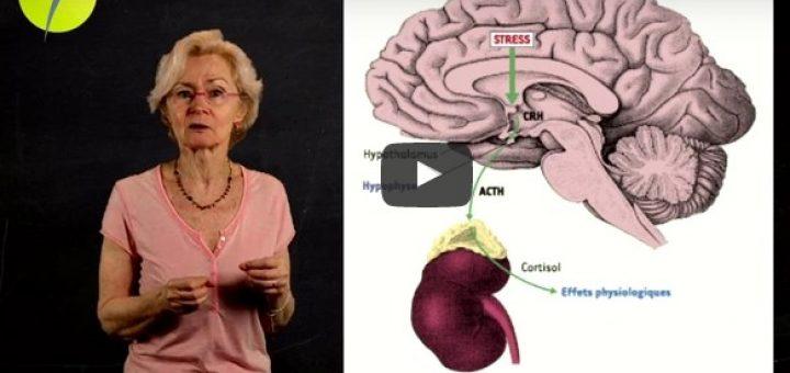 neurosciences bienveillance école