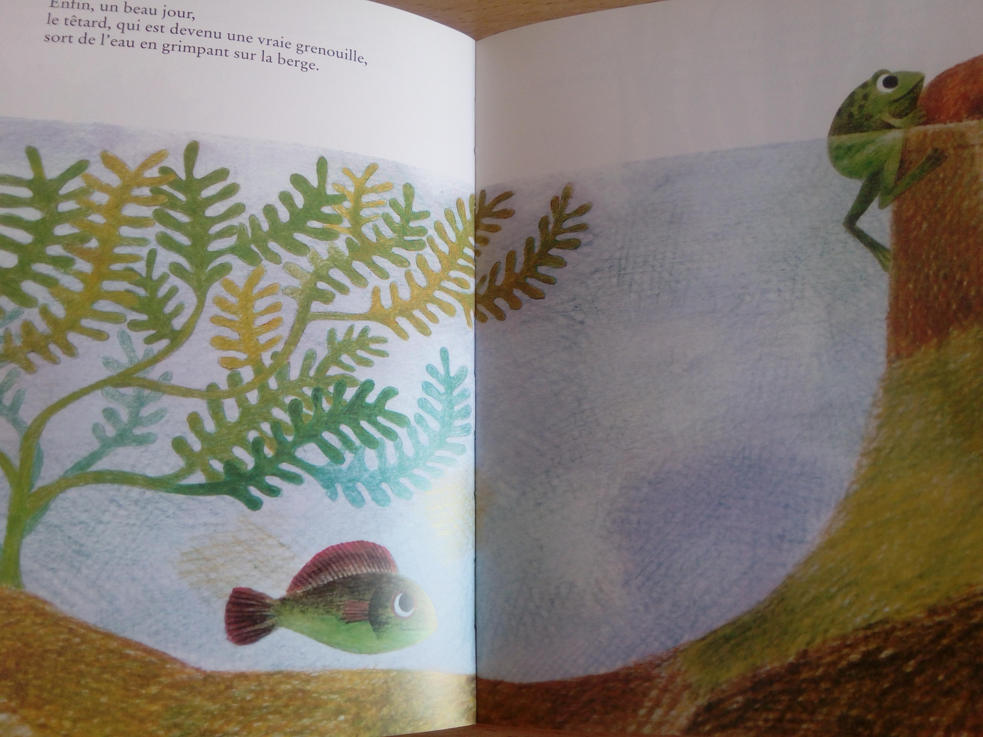livre enfant un poisson est un poisson