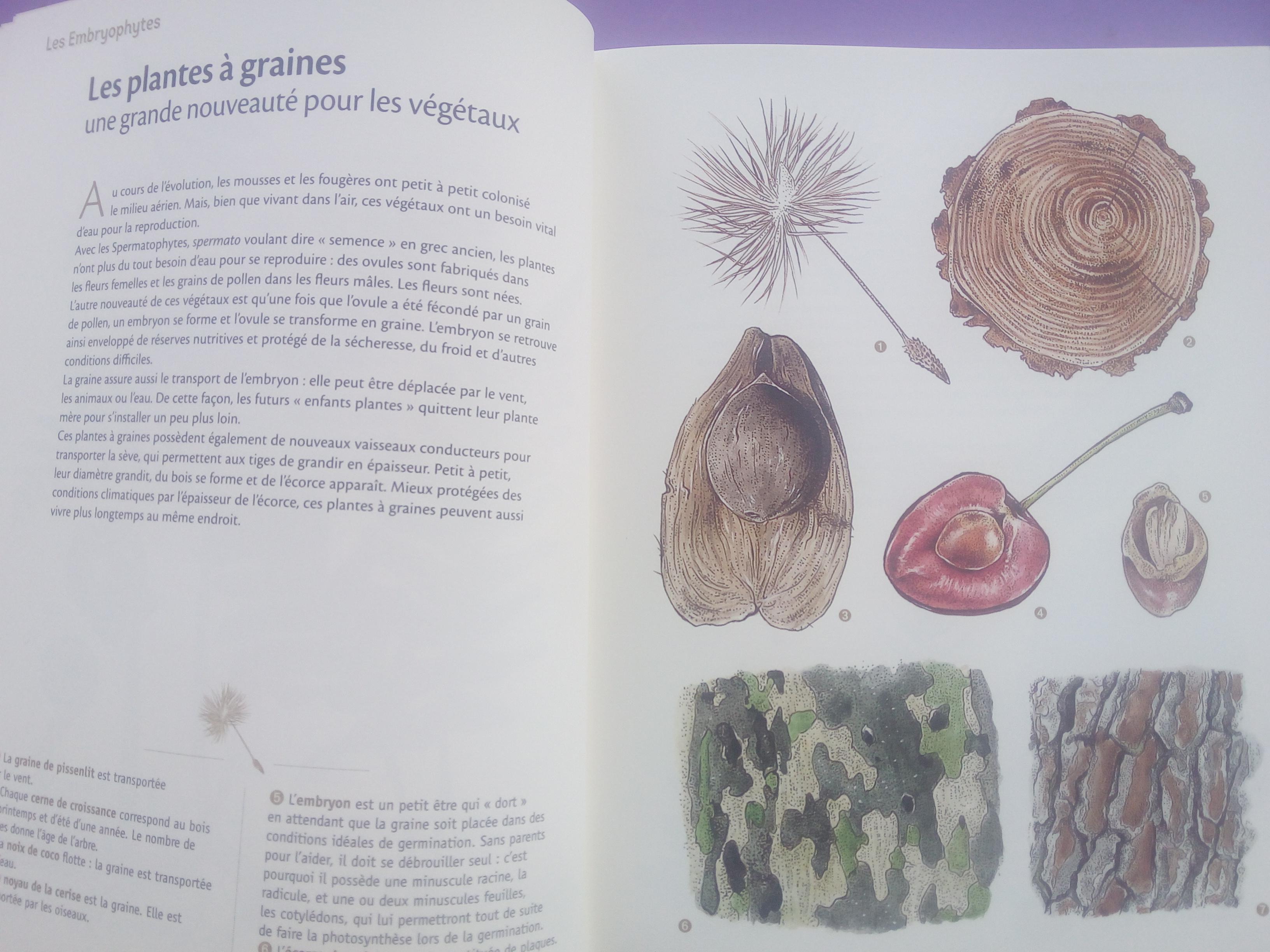 livre enfants nature et plantes