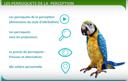 spark perroquet percéption