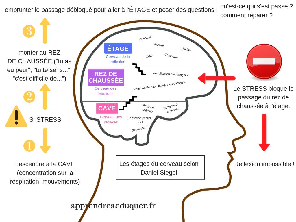 étages du cerveau des enfants